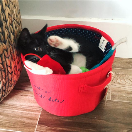 It's #CatWeek! The cats out of the bag. And in the bucket. #EDbyPetSmart