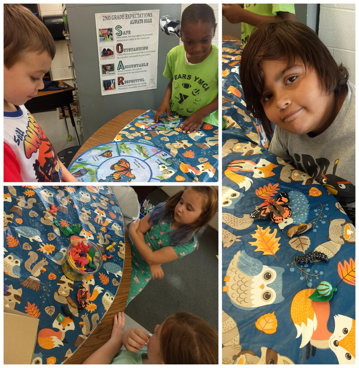Science stations from Monday! Butterfly life cycles  #secondgrade #sciencerocks <br>http://pic.twitter.com/IiIDle1DdR