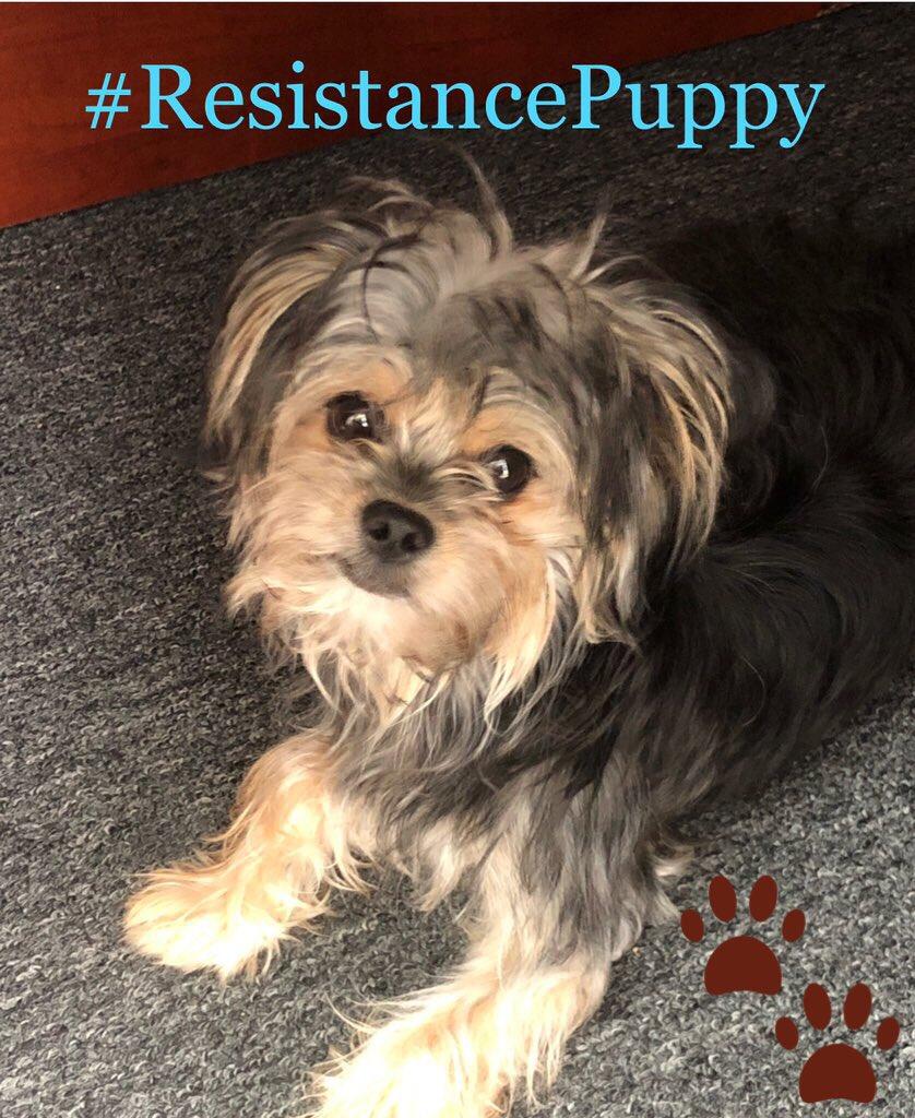 @Mitumba10 I'll start with my #ResistancePuppy.