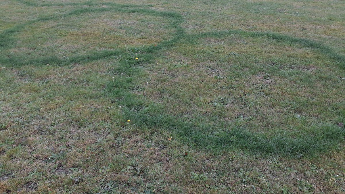 Mystical grass circles. Seen on sports field any ideas how they could be formed? #naturalphenomenon #365dayswild #weirdnaturepic.twitter.com/POENiUhoOe  by Steve