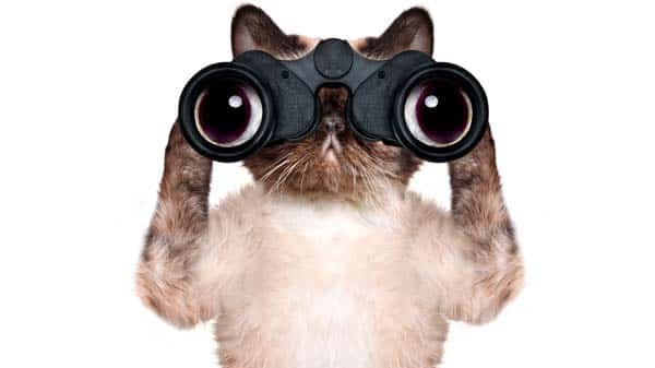 We're watching... twitter.com/sturdyalex/sta…