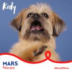 "Image for the Tweet beginning: #PetsofMars: I'm Kody ""Doos."" I'm"