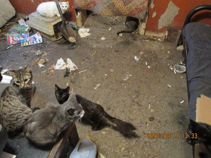 85 Cats Rescued From Hoarder