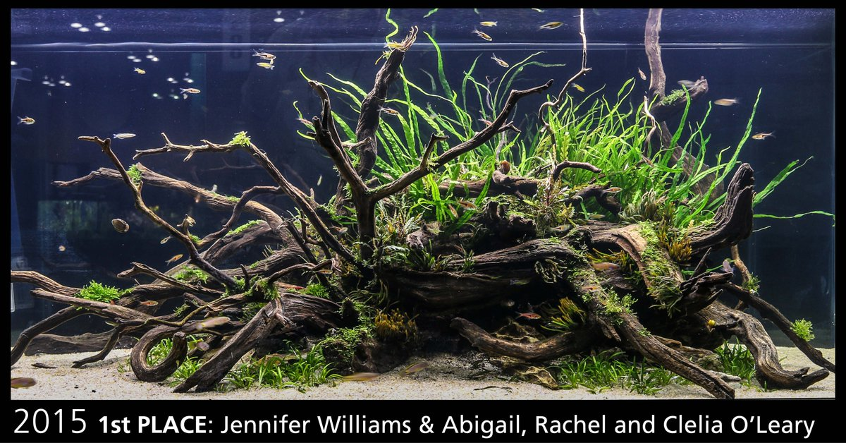Fluval A Twitteren The Weekend Is Almost Here Which Means The Aquaticexper Aquascaping Live Invitational Starts Soon We Have Had Some Incredible Tanks Over The Past Couple Of Years Check Them Out