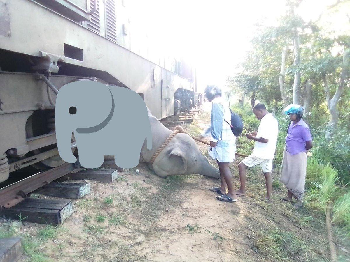 Bad time for Sri Lankan Elephants  ! Elephant trapped after hitting a train in Welikanda area. Expect trains delay along Batticaloa line   #LKA #SriLanka #SriLankanElephants  Image via @22Dinukpic.twitter.com/gc9rEXtY2i