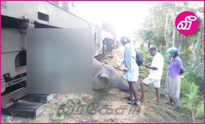 ரயிலுடன் யானை மோதியதால் மட்டு - பொலன்னறுவை ரயில்சேவை பாதிப்பு! https://bit.ly/2owH3eD #LKA #SriLanka #SriLankanElephants #Welikandapic.twitter.com/fWjx65kNdB