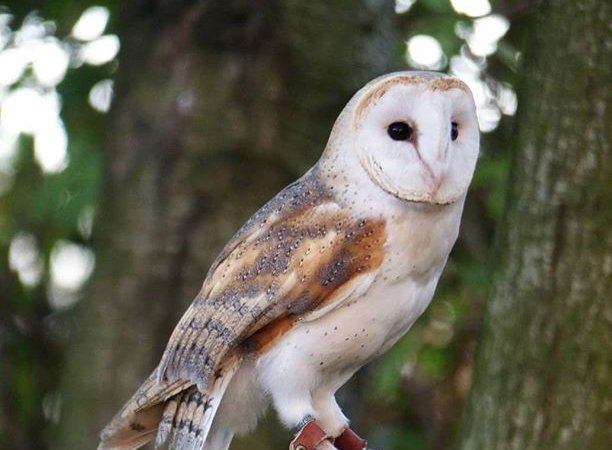 We are proud of our New Beacon Boys who have been involved in this great project.  Do go and visit if you can during #halfterm #outdoorlearning #owls @NTIghthamMote @kentowls