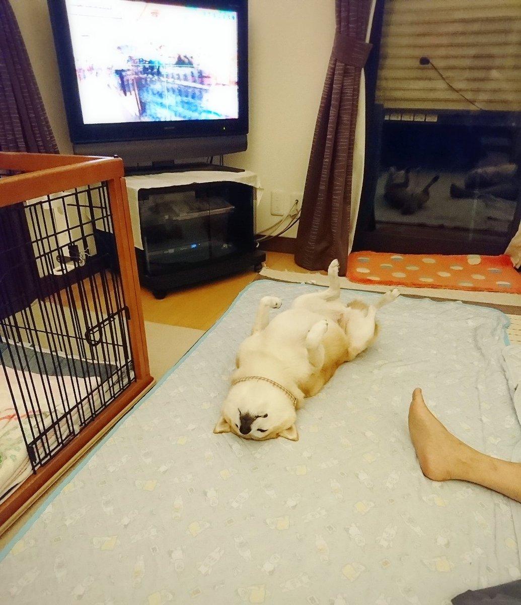 犬をしまえ。#ナイス犬しまい