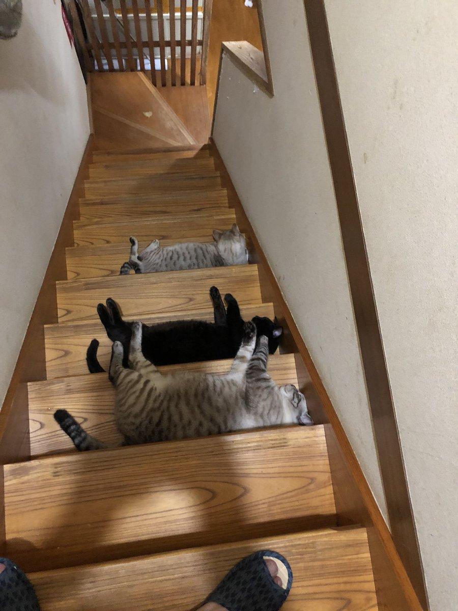 猫奴隷さんの投稿画像