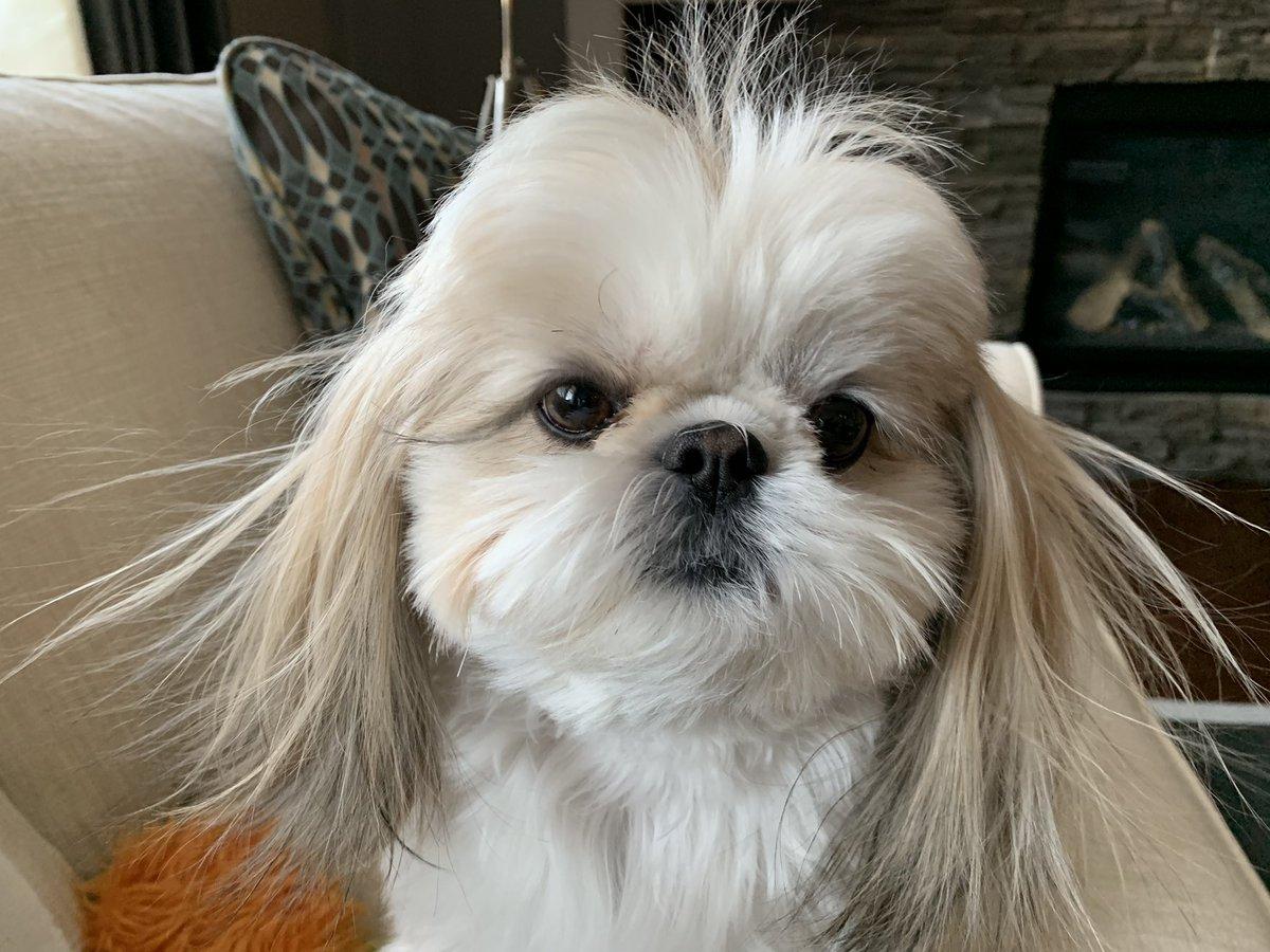 I'm a little staticky this morning.  #dogsoftwitter #FridayFeeling <br>http://pic.twitter.com/nPFOp1MCmZ