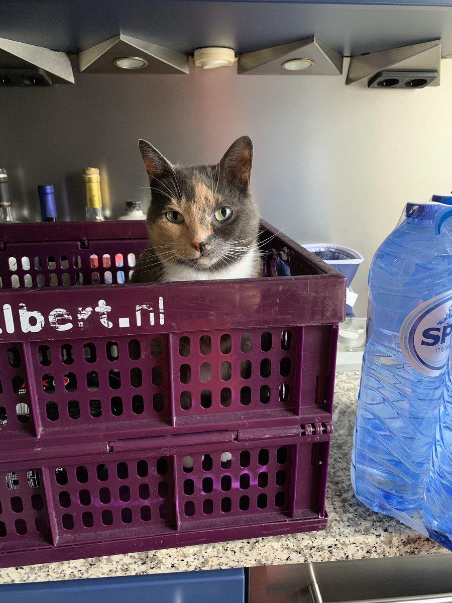 Piep helpt het vrouwtje met het opruimen van de #boodschappen  👍🏼😺🤓 @albertheijn #CatsOfTwitter #cat #kat #hulpindehuishouding