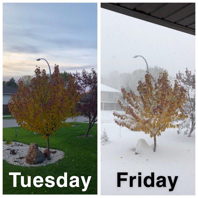 Life in Manitoba! #mbstorm #thanksgivingblizzard