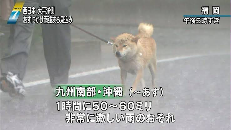 小早川コチョーさんの投稿画像
