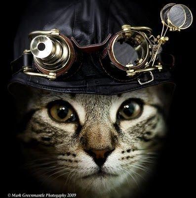 #Steampunk #Cat  #photo by Mark Greenmantle #CaturdayEve