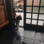 台風で避難してきた猫のお客さんが可愛すぎる件