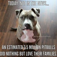 October is #PitbullAwarenessMonth. Due to over-breeding & ignorance, Pitties & Chihuahuas are the most euthanized shelter breeds. Pits have the double whammy of stigma caused by cruelty. If youre ready to adopt a new friend, PLEASE consider those most overlooked. #AdoptDontShop