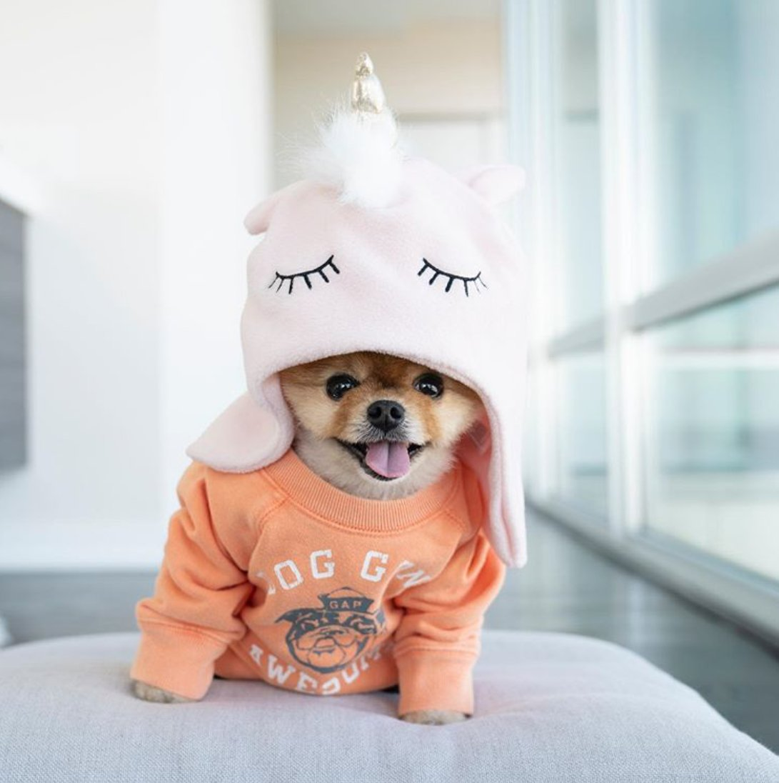 Just take a minute to imagine spending your Saturday morning with @jiffpom😍🤗 📸@jiffpom