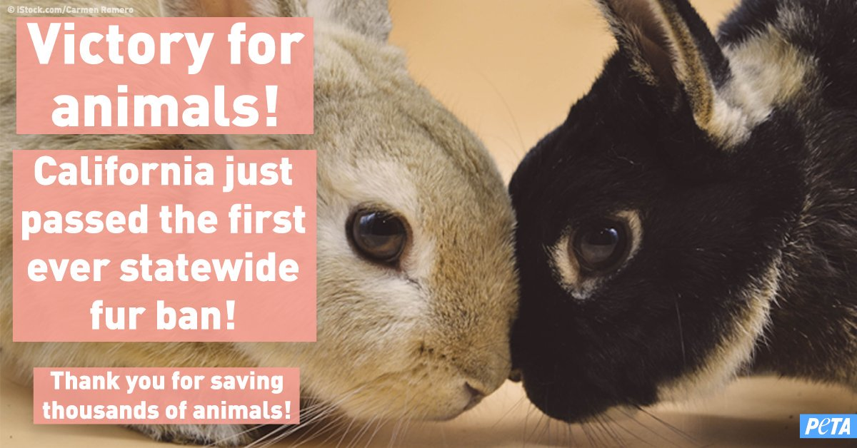 @travisbarker 🎉 WE DID IT 🎉 California just passed the first-ever statewide ban on fur! The new law will save thousands of rabbits, foxes, & other animals killed for fur 🦊🙌🐇 #AB44    Thank YOU for being a part of this incredible victory for animals ❤️ https://t.co/4xGtxUmg6x