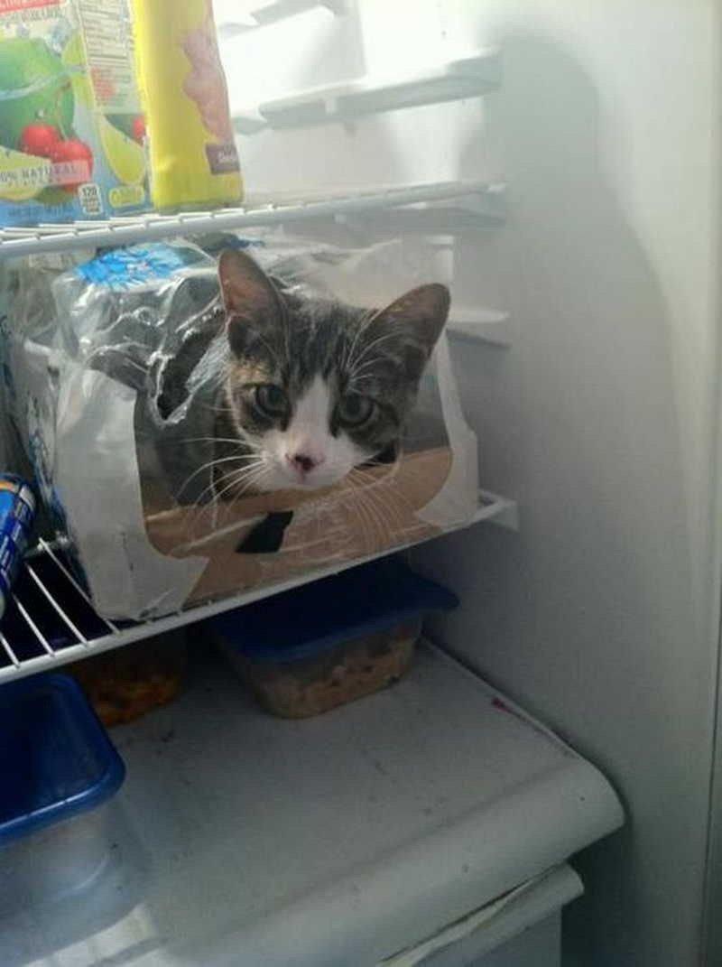 отечественного спрятался в холодильнике фото шестидесятые