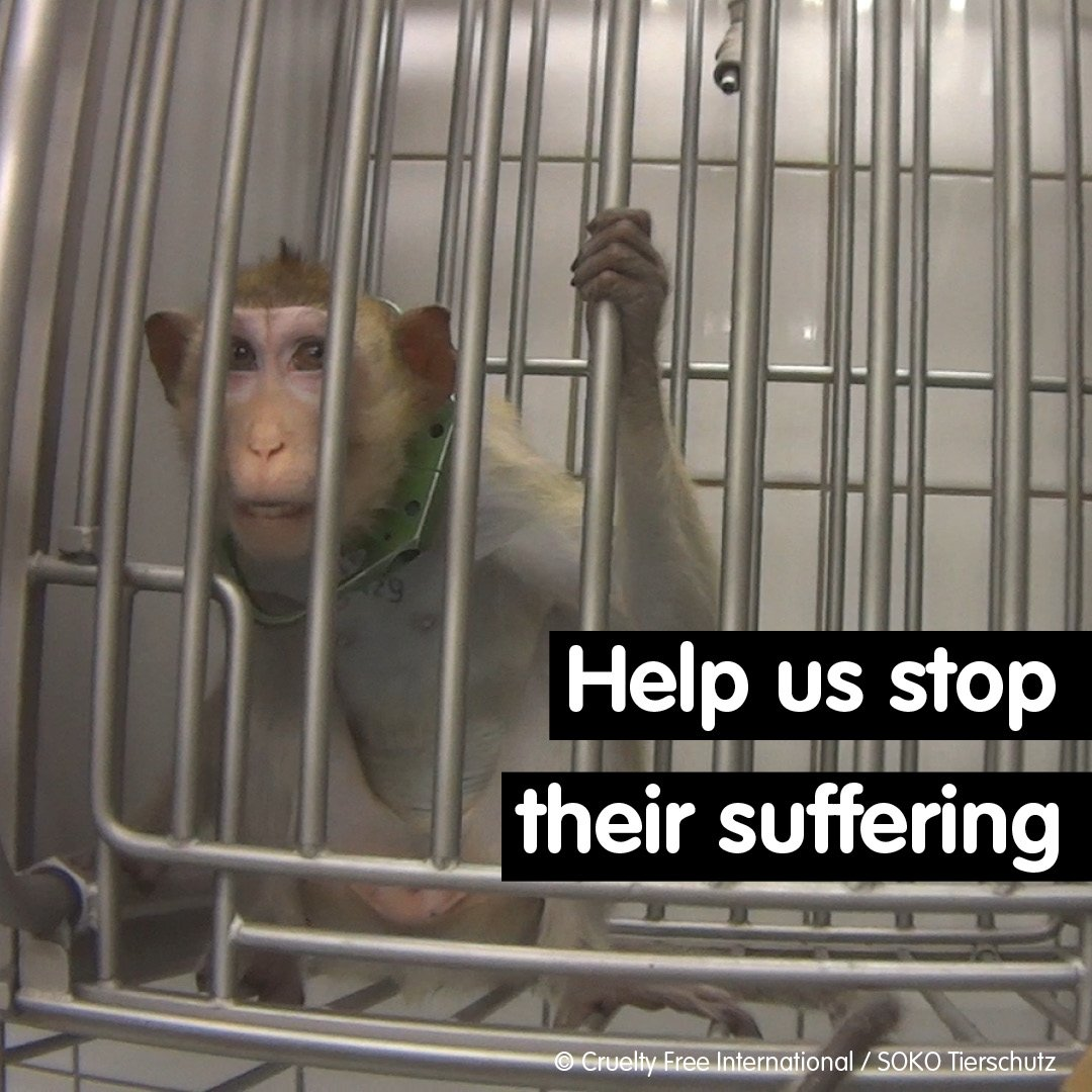 Our investigation at a laboratory in Germany revealed the horrors animals face behind closed laboratory doors. Dogs left bleeding and dying, monkeys routinely abused. Join our call for Europe to urgently review animal testing laws: bit.ly/2M7tZ8t