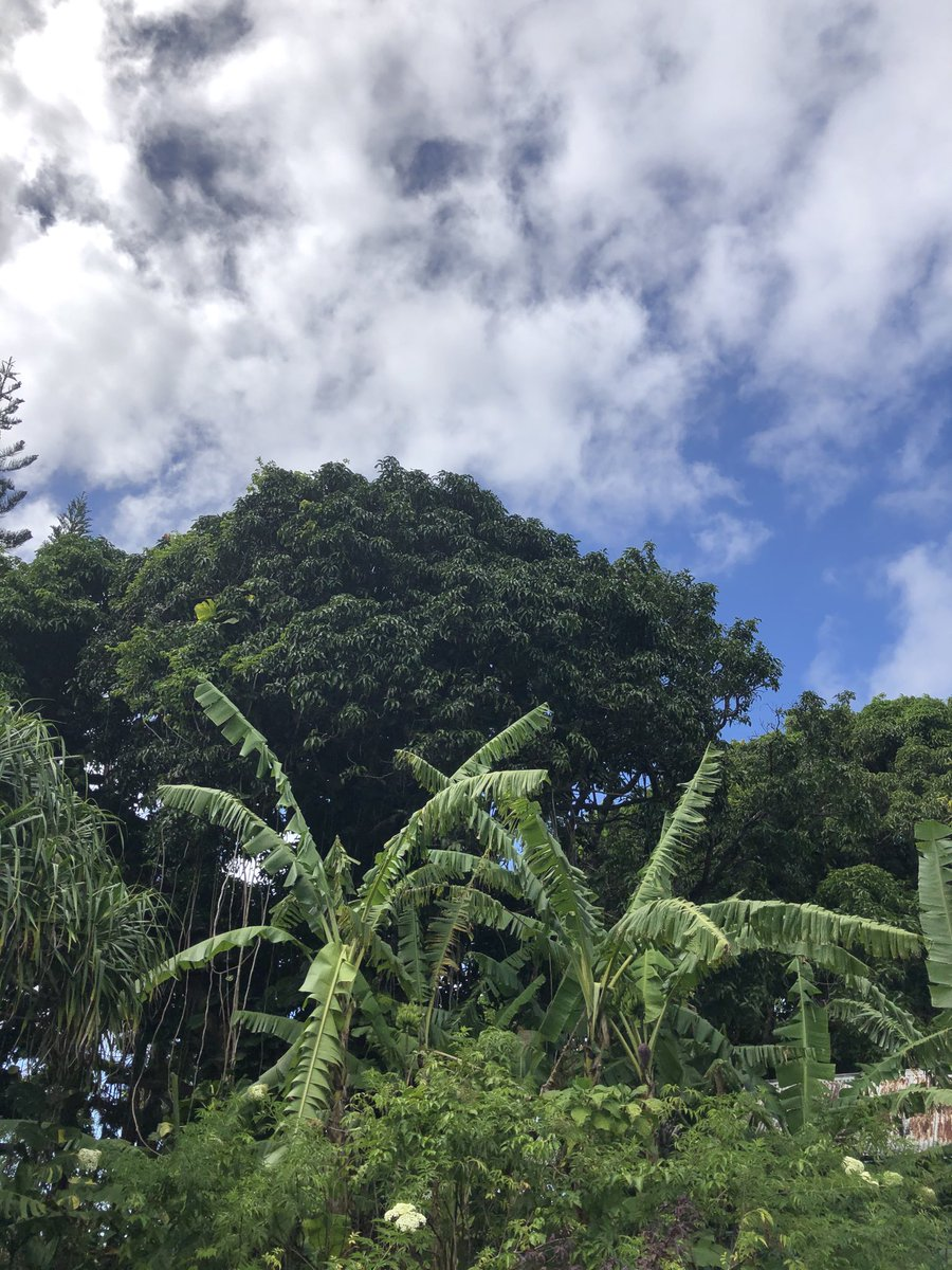 test Twitter Media - Beautiful breezy day in Haiku. #cmweather #Maui #Mauinokaoi #MagicalMaui https://t.co/Vx8O176EjP