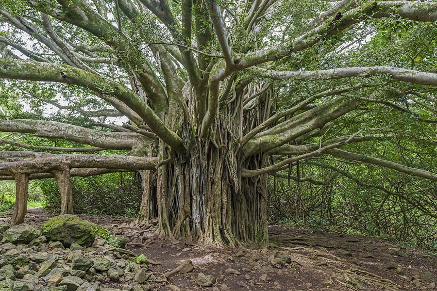 Art for the Eyes!  #Hawaii #Maui #nationalpark  #artwork #art #artlover #landscapelovers #photooftheday #wallart #PHOTOS #visa #AmexLife #amex #photographyislife #picoftheday #saatchiart #italiausa #naturelovers   https://buff.ly/2BLpefN