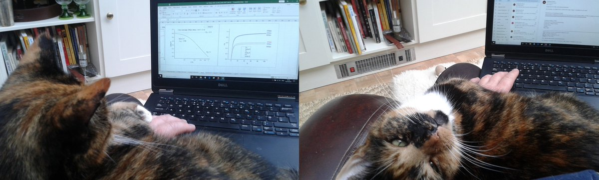 I help with STED theory (& email) #mypetin5words