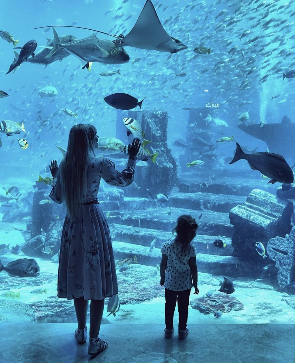 The shark lagoon, water tubes and varied rides as well as the Children's Play Area will offer you some retreat away from the children who will keep busy in their own little world at the #AquaventureWaterPark  #VisitDubai #Dubai #Dubaiattraction #LuxuryTravel #DubaiHoliday pic.twitter.com/mlURsbFTdg