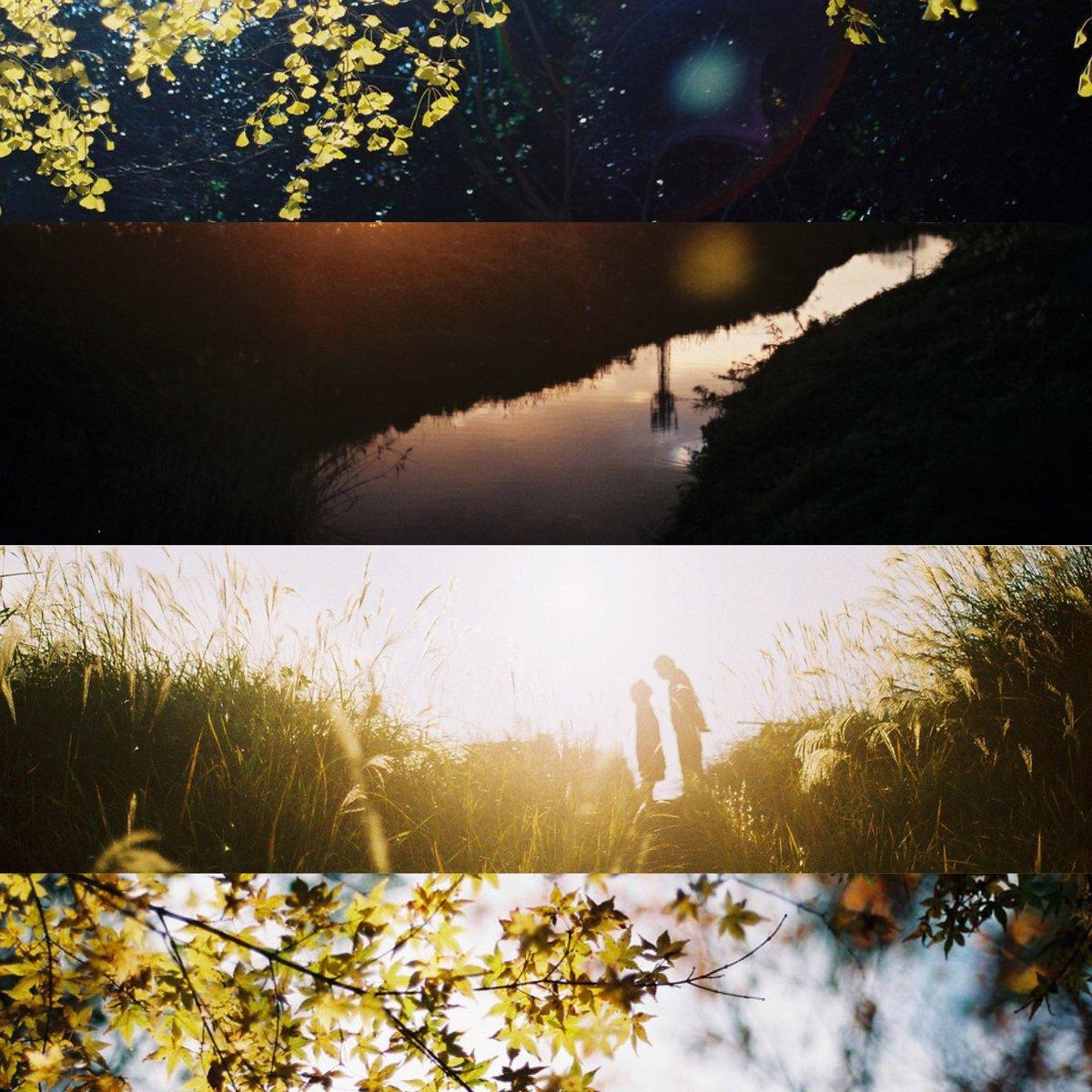 星空のような秋の下で