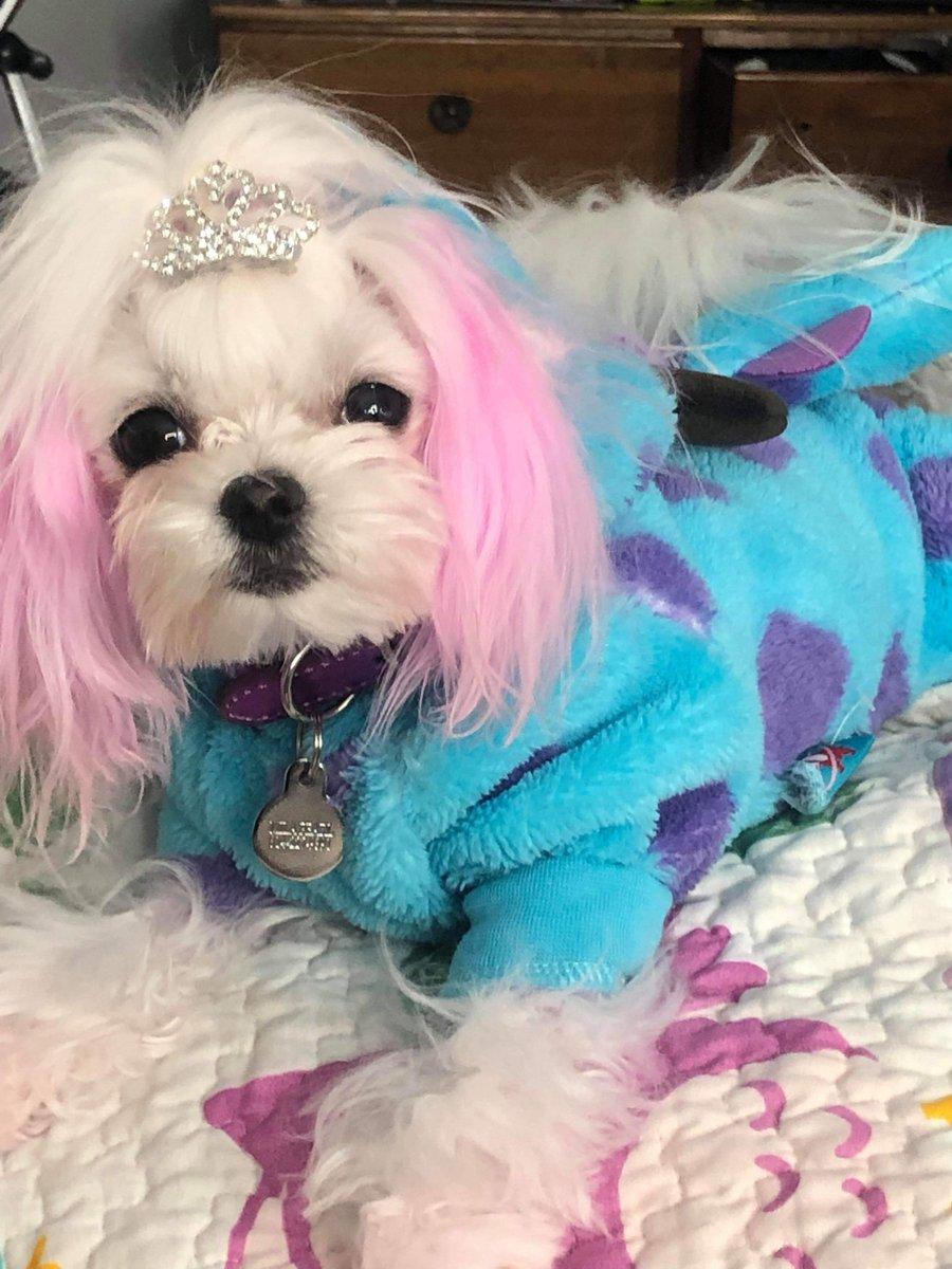 RT @DanBearyremax: Mila has her very own closet. Who has closests for their dogs?#dogs #dogsofinstagram #furbaby #dogcloset #doggrooming #doggroomingsalon #family #roadtrip #rimersburg #clarioncounty #spoileddog #doggybolegrooming #rubyandmila #realtorli…<br>http://pic.twitter.com/zTEwMAxgBx