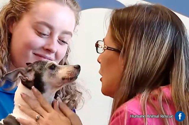 #LoMásTrinado Ni el tiempo ni la distancia pudieron separarlas: perdió a su perrita y la encontró 12 años después y a más de 1.500 kilómetros de distancia -> http://bit.ly/33ov69u