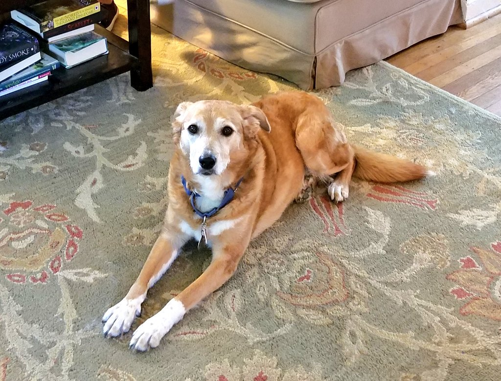 """Things I've heard shouted upstairs in the last 20 minutes while sitting in the basement:  """"Shelby is running around trying to eat a fly!""""  """"She ate the fly!""""  """"Shelby knocked over the butter dish!""""  """"She ate all the butter!"""""""