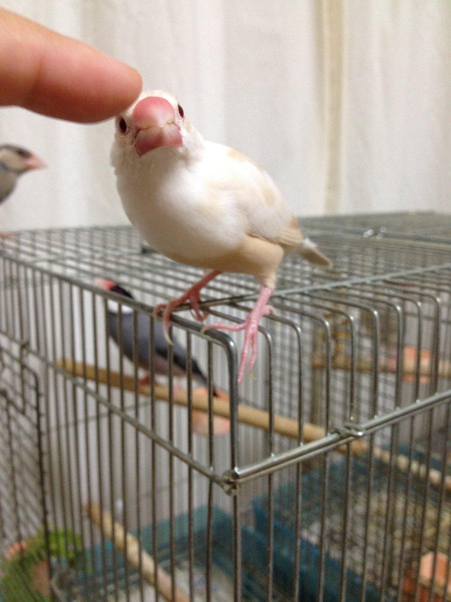 【文鳥の日企画】文鳥の日に愛鳥さんの写真をツイートして文鳥への思いをここぞとばかりに垂れ流す企画です。日時:2019/10/23(手にフサ)20:00〜10/24(手にしあわせ)24:00ハッシュタグ #文鳥の日2019文鳥まつりのタグと間違えないでね!2018年の様子はこちら