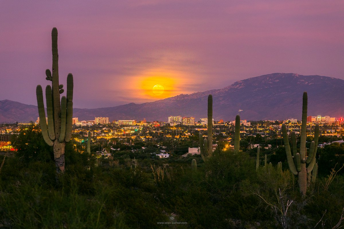 """Hunter's"" Full Moon Rise over Tucson, Arizona this evening! #FullMoon #moonrise #huntersmoon #tucson<br>http://pic.twitter.com/lbYJjdLLHG"