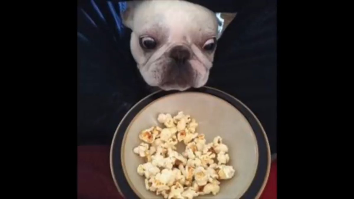 You have 10 seconds to follow me or this dog will steal your popcorn<br>http://pic.twitter.com/xtxLpyNy11