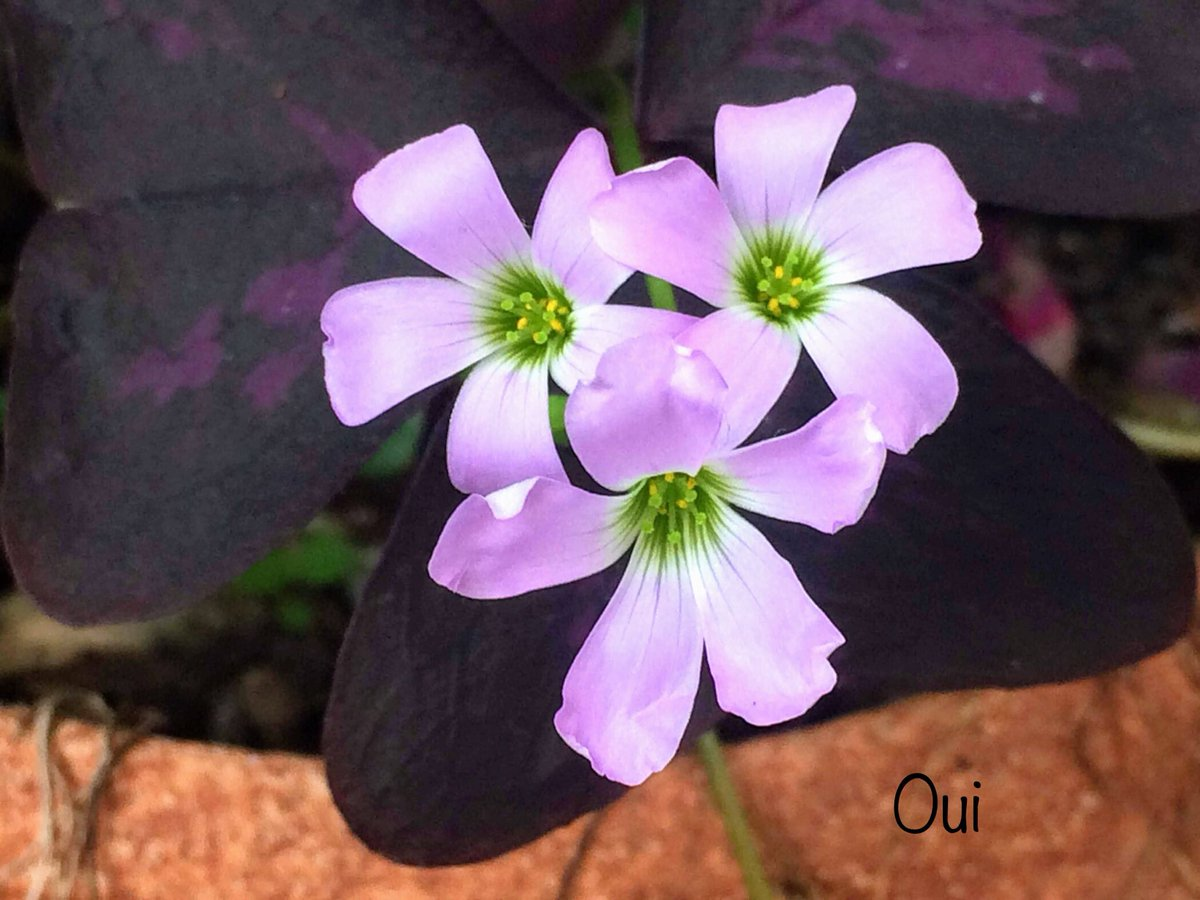 #Flowers💜➰💜➰😉Oui will cheer  ➰😊They're will pass a bad moments.Beginning to new week......Twitter planet 🌎#byoui photographer 🙎🏻♀️💟🦆