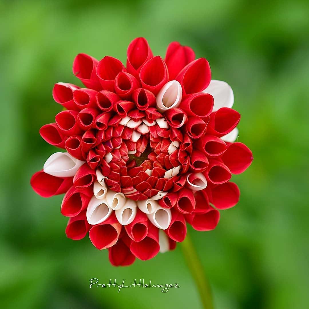 .@Vonlutzie Guten Morgen liebe Lutzi und wünsche dir einen wunderschönen Montag 😊🌷! #flowers