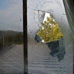 窓に飛び込んできた鳥!ガラスも割れてしまった…。