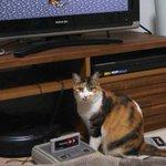 懐かしのスーファミをプレイしていた結果?猫が危険な位置でお座りしちゃった!