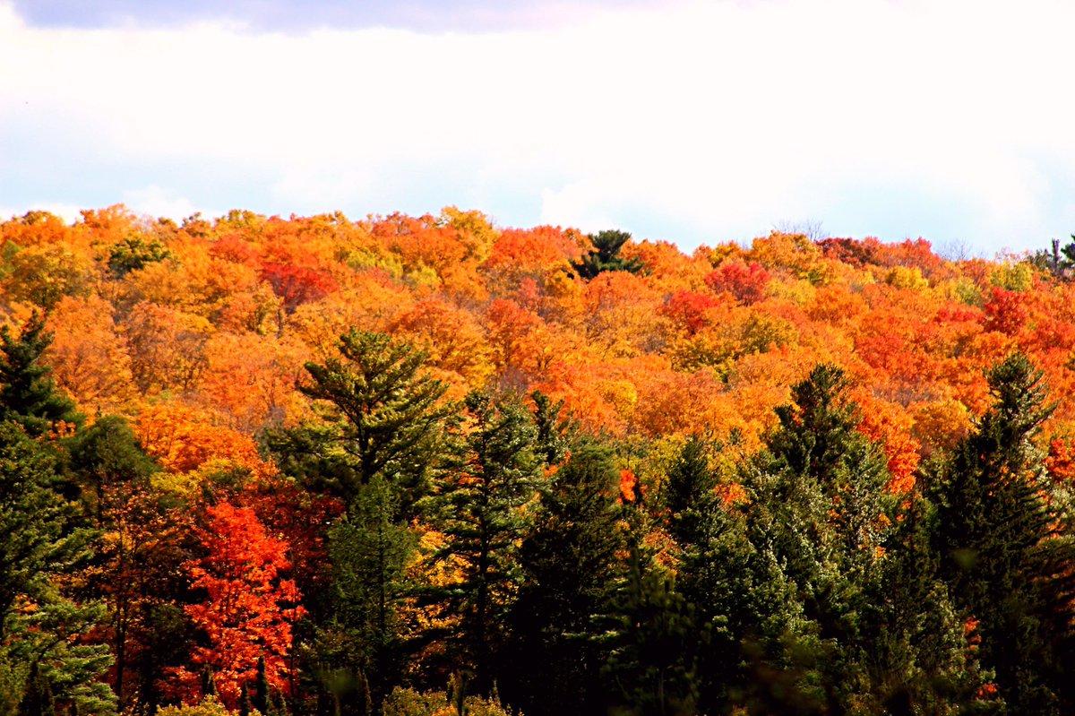 Where colors come alive. #Ontario #Canada