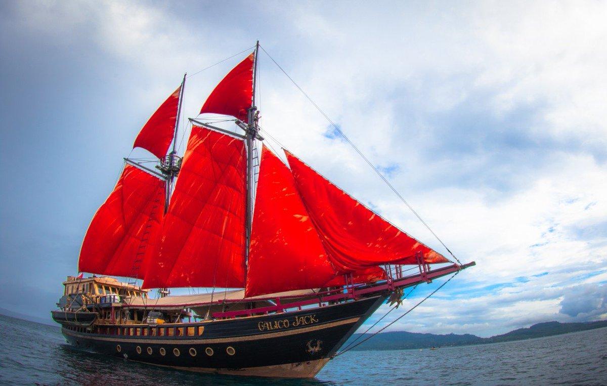 Pirate cruise to Raja Ampat  https://www.calicojackcharters.com/blog/raja-ampat-dive-trip/…  #liveaboardindonesia #liveaboardrajaampat #liveboarddiving  #diving #cenderawasihbay #rajaamapt #tritonbay #bandasea #liveaboard #padi #divecruise #divetrip #rajaampatdiving #indonesiadiving #divingindonesia #diveholidayspic.twitter.com/tuPXeRnANP