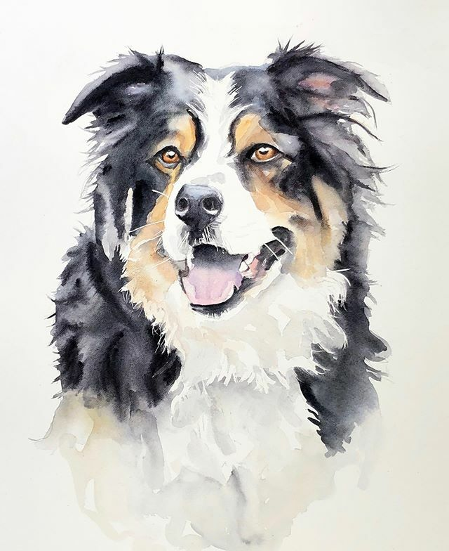 Watercolour dog, still accepting commissions or Christmas don't leave it too long or you will miss out!  I ship everywhere. #australianshepherd #dogsofinstagram #dogpainting #paulcheneyart #parisontario #watercolorpainting #watercolour #aquarelle #comiss…