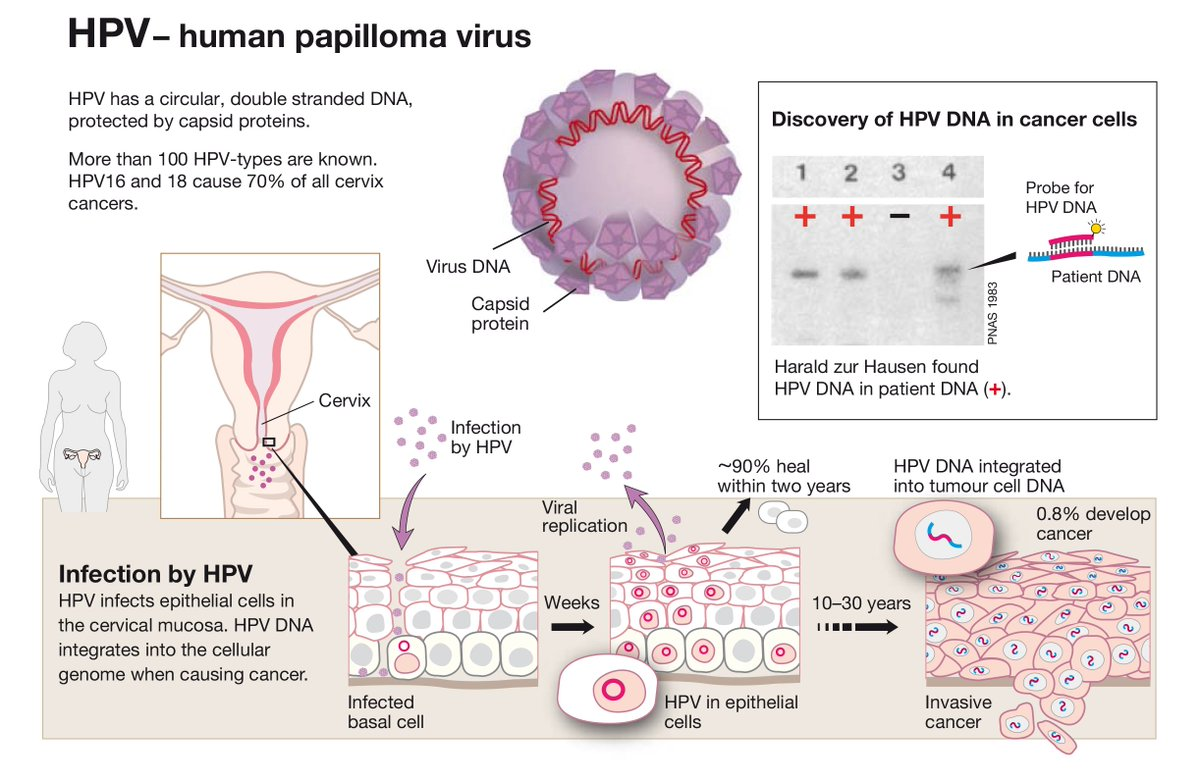 Hpv Archives