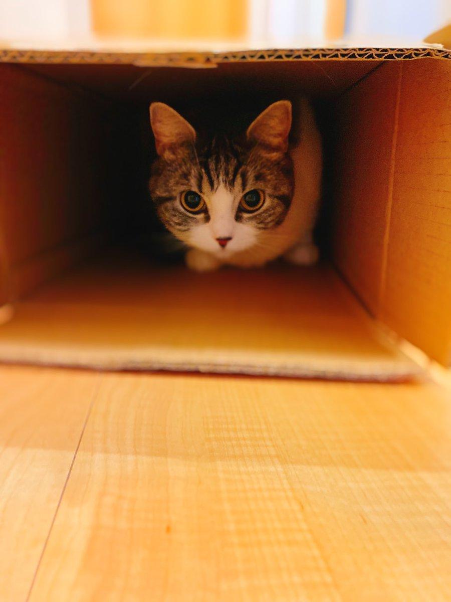 届いた荷物の空箱とかにすぐ入ります