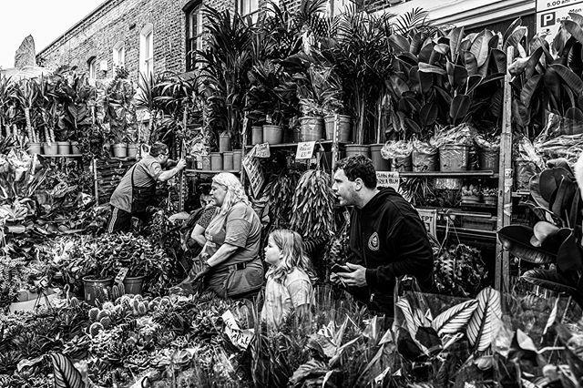 The plant family . . . . #columbiaroadflowermarket #familybusiness #SPiCollective #thestreetphotographyhub #eyeshotmag #burnmagazine #dpsp_street #streetphotography #streetphoto_bw #streetphotography_bw  #street_photo_club #ig_street #ig_streetphotograph… https://www.instagram.com/p/B4J5V21Hq0Y/pic.twitter.com/8cok1Cw4ou
