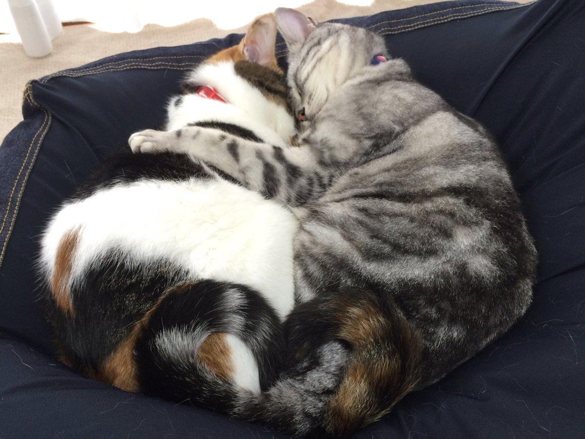 猫でも貼って落ち着こう('ω' )三('ω')三( 'ω')(4年前のバカップルです)