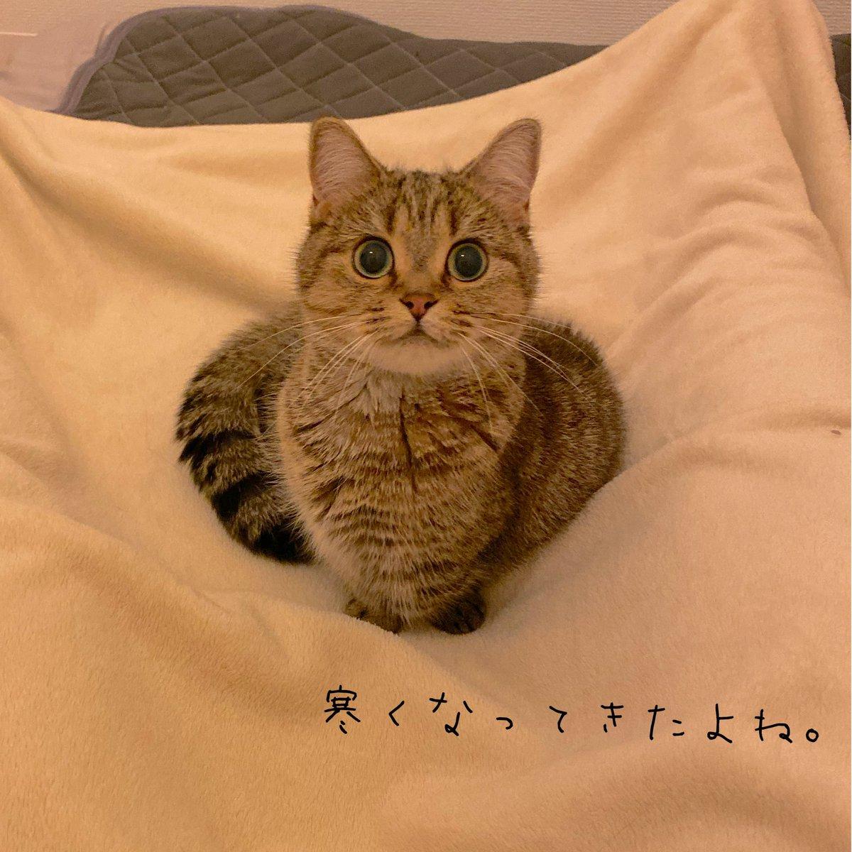 毛布を掛けて足を広げて待っていると、きなこが座ってくれる季節になりました^^