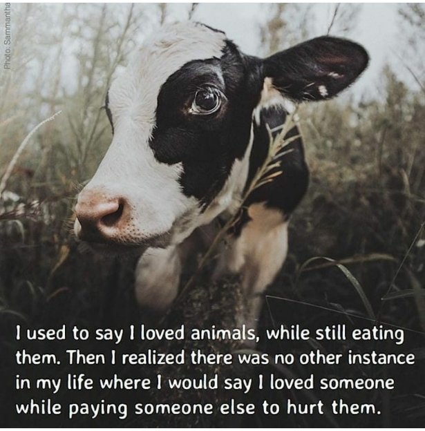 @altunes402 @agargmd @Ivy_Middleton @yourvegantutor Youre not making healthy choices Youre seeking information that comforts you in your unnecessary choice to support animal suffering Theres no requirement that we consume the products of animal exploitation in order to meet our nutritional needs, or otherwise
