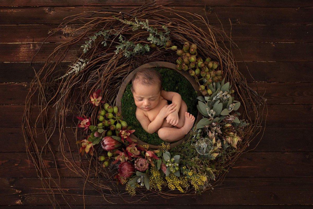 One of my favourite Australian native flower sets http://www.natashashawphotography.com #natashashawphotography #yanchepphotographer #yanchep #perth #newborn #newbornphotography #newborns #mumsofperth #newbornphotographer #flowers #maternity #perthmums #nativeflowersofaustraliapic.twitter.com/lVj81sfCRa