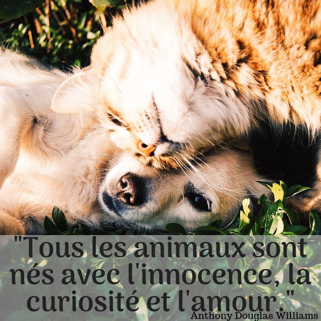 Tous les animaux sont nés avec l'innocence, la curiosité et l'amour. Oui, on vous le dit ! - #cortikafr La nature à emporter.💕 - #éthique #animauxmignons #calins #animauxdecompagnie #animaux #jaimelesanimaux #citation